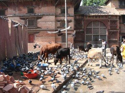 Nepal_Kath..DurbarS.jpg