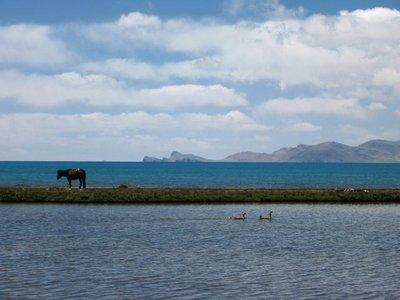 Tibet_Namtso_Horse