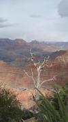 Grand Canyon - Yavapai Point