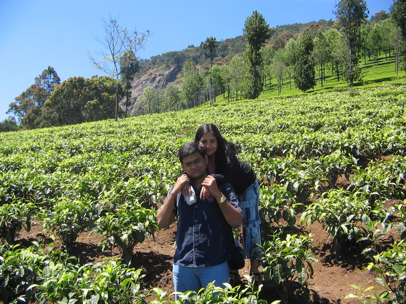 Tea plantations of Ooty(India)