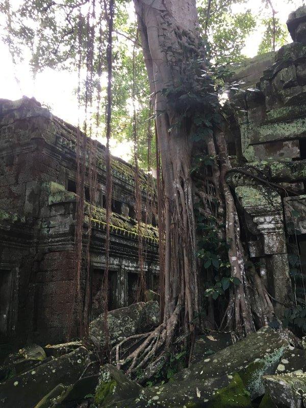 large_90_tree-ruins.jpg