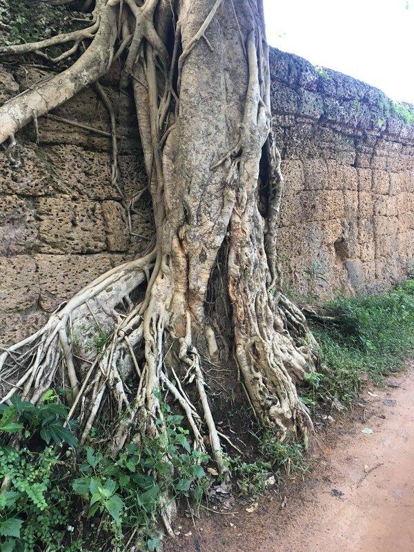 large_90_tree.jpg