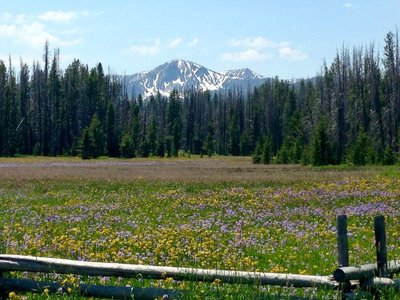 Sawtooth Mountains wildflower field
