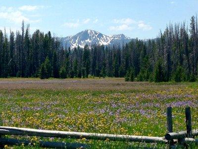 Sawtooth Mountains wildflower field
