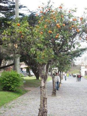 uruguay_029.jpg