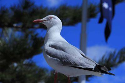 VT Meet - Watsons Bay by aussirose - Sydney