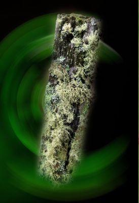 148686657595294-Moss_covered.._aussirose.jpg