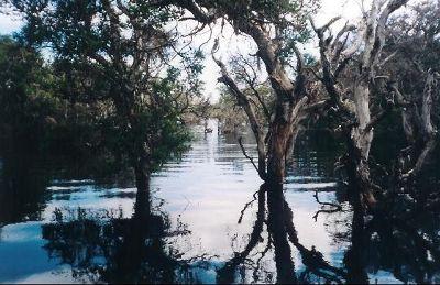 1839013-Mangimup_Swamp_Esperance.jpg