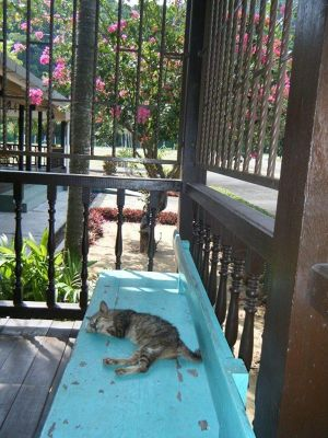 Cat at Pulau Tioman Airport says Goodbye