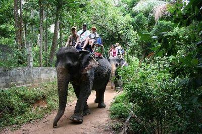 Koh Samui Elephant Safari