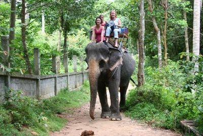 Elephant trekking Koh Samui