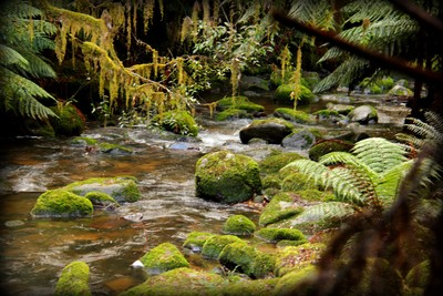 Pyengana St Columba Falls - 2