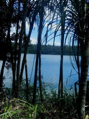 307964074656008-Lake_Eacham_..ose_Cairns.jpg