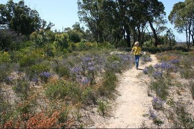 3089760-Australina_wildflowers_Watheroo.jpg