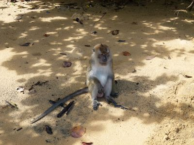 33108956279150-Monkey_on_Pu..u_Langkawi.jpg