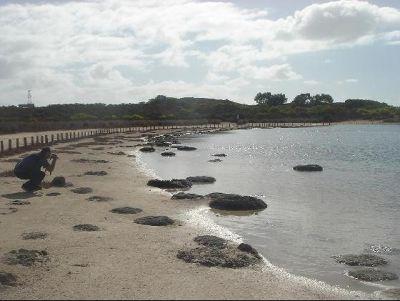 3499327-Stromatolites_Perth_Cervantes.jpg