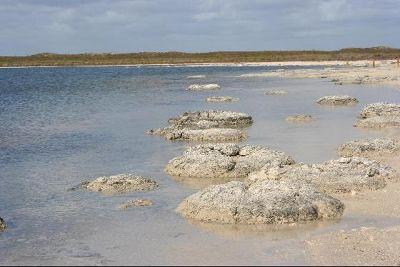 3499328-Stromatolites_Perth_Cervantes.jpg