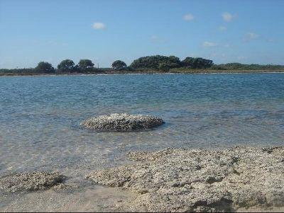3499329-Stromatolites_Perth_Cervantes.jpg