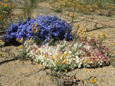 4234052-Perenjori_wreath_flower_Perenjori.jpg
