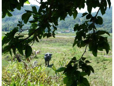 431059186304573-Rice_Museum_..u_Langkawi.jpg