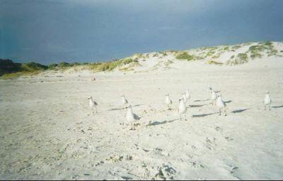 467229-Mullalloo_Beach_Mullalloo_Beach.jpg