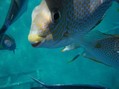 4910762-Snorkling_Pulau_Tioman_Pulau_Tioman.jpg