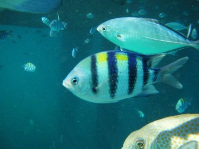 4910771-Snorkling_Pulau_Tioman_Pulau_Tioman.jpg