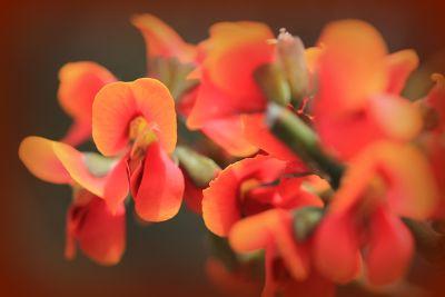 680259197660511-Wildflowers_.._Cervantes.jpg