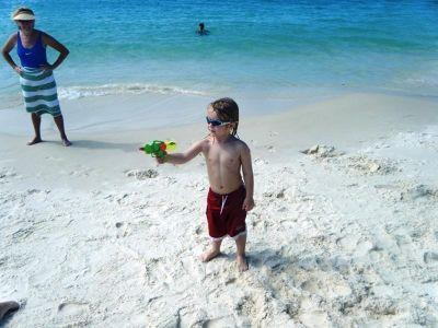 724030804635634-Baby_budgie_..rlie_Beach.jpg