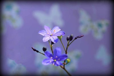 7697114-Western_Australian_Wildflowers.jpg