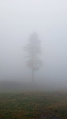 76_Vancouv..isty_Tree_a.jpg