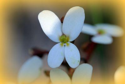 889225907478674-Wildflowers_..se_Toodyay.jpg