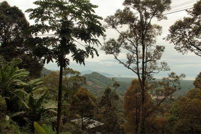 915488216564874-aussirose_vi..eer_Penang.jpg