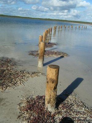 921640537659865-Stromatolite.._Cervantes.jpg