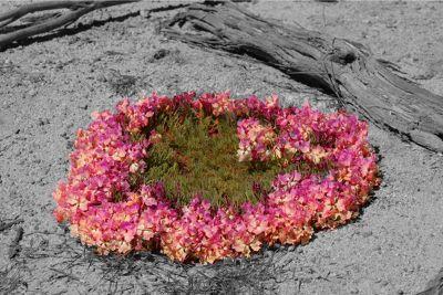 949581296319603-Wreath_Flowe.._Perenjori.jpg