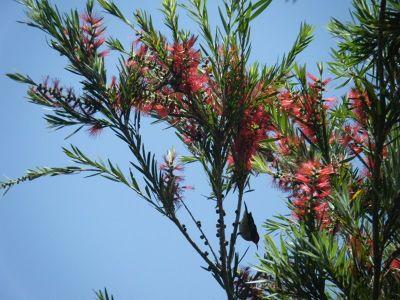 964887557178251-Bird_Watchin..ose_Cairns.jpg