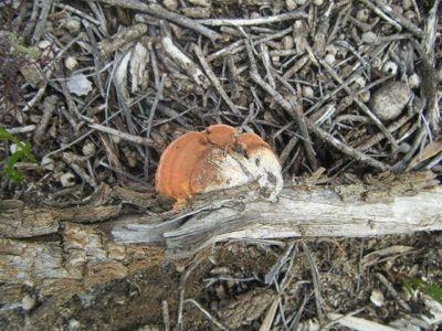 And a Colourful fungi