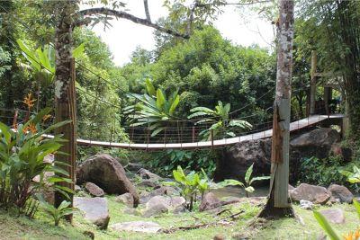 997203546279142-Durian_Peran..u_Langkawi.jpg