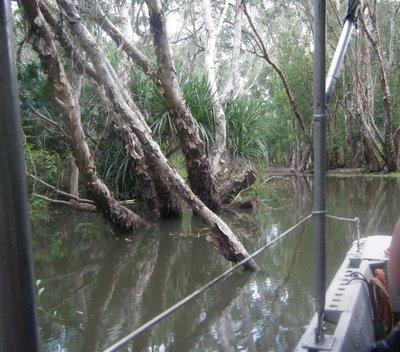 Arnhem_Swamp.jpg