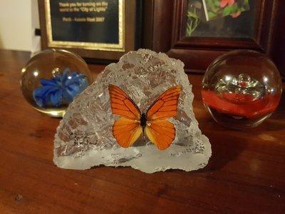 Butterfly_Park_Gift.jpg