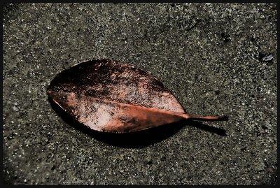 Cape_Trib_..intage_Leaf.jpg