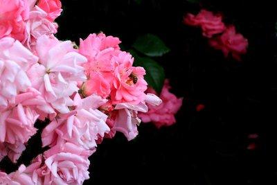 Flower_-_favourite.jpg