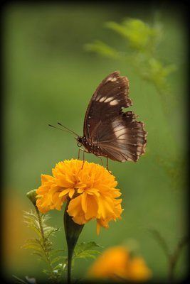 Flower_and_Butterfly.jpg