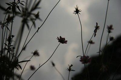 Flowers_Grey_Mist.jpg