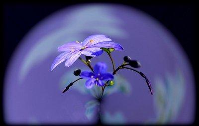 Half_Blue_..n_the_round.jpg