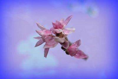 Pink_Wildflower.jpg