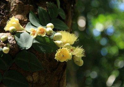 Rainforest..Cape_Trib_4.jpg