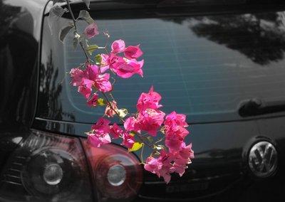 Subiaco_St..Pink_Flower.jpg