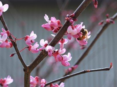Tip_-_Flowers_6.jpg