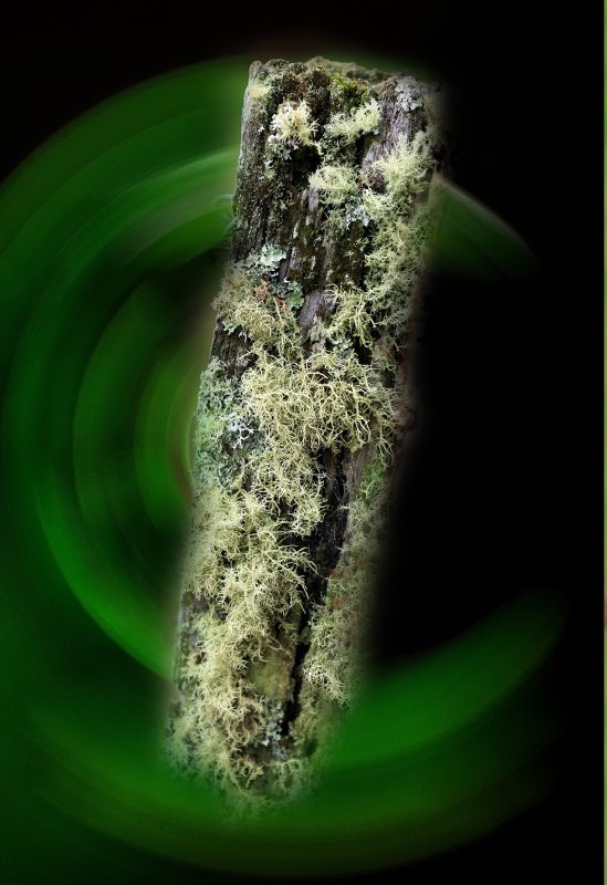 Moss covered post Photoshopped by aussirose